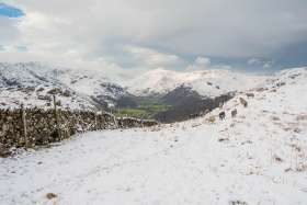 Sheep Above Borrowdale