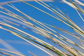 Marram Grass, Blue Sky