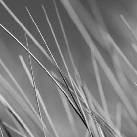 Marram Grass, Monotone