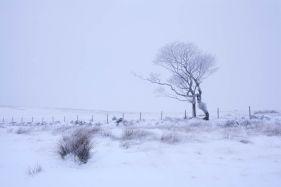 A Winter Dance II