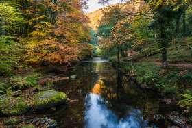 Autumn on the East Lynn River