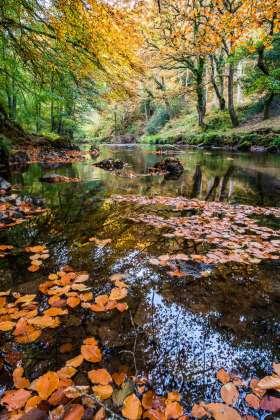 Autumn Colours, East Lyn River