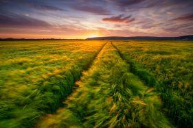 Great Field, Braunton
