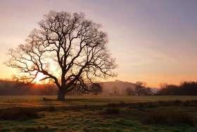 Old Oak Sunrise